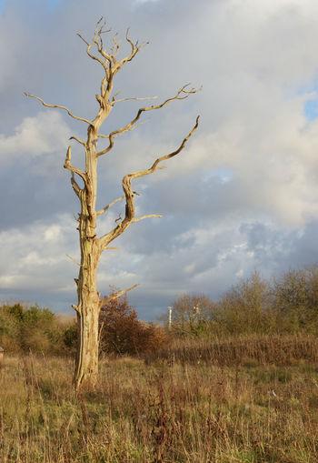 Tree Sky Landscape Plant Cloud - Sky Bare Tree Dead Plant Dead Tree