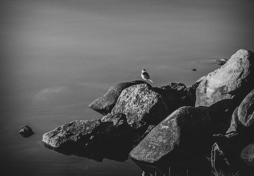 A bird on rocks Blackandwhite Bird Water Nature Sea No People Animal Themes Day Sky Animals In The Wild Rock Beauty In Nature One Animal Vertebrate