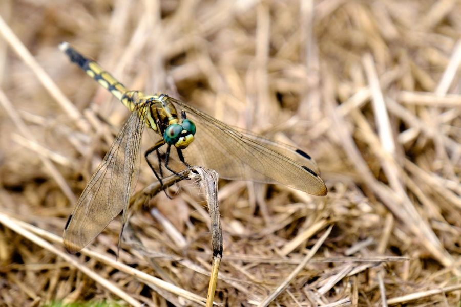 Dragonfly Insects  Nature Nature_collection EyeEm Nature Lover Naturelovers Fujifilm_xseries FUJIFILM X-T1 XF 18-135mm/f3.5-5.6 WR