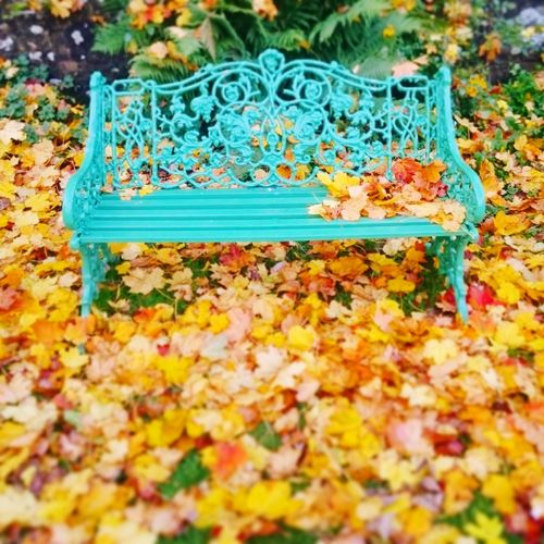 Autumn Leaf No People High Angle View Change Nature Beauty In Nature Outdoors Leaves Yellow Day Fallen Relaxation Field Autumn🍁🍁🍁 Autumn Colors Autumn Leaves Seat Relaxing TakeASeat The Way Forward Beauty In Nature Autumn Formal Garden Freshness