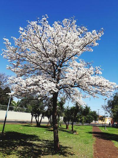 Tree Clear Sky Sky Grass