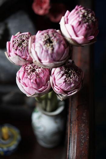 Sarocha = Lotus EyeEm Selects Pink Color Flower Close-up Lotus ดอกบัว Pink Pink Flowers Jar