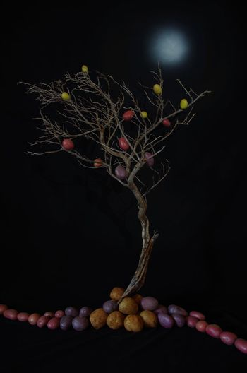 Close-up of berries on table against black background