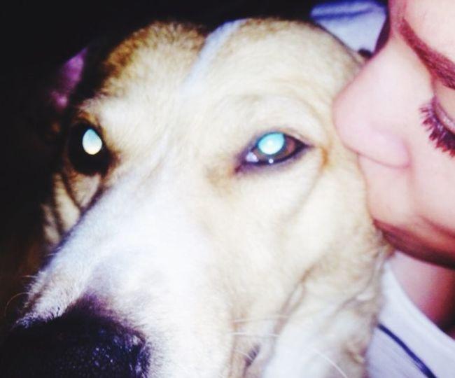"""""""Du bist es jede Sekunde Wert gewesen"""" Friendship My Dog <3 Miss Einundalles First Eyeem Photo"""