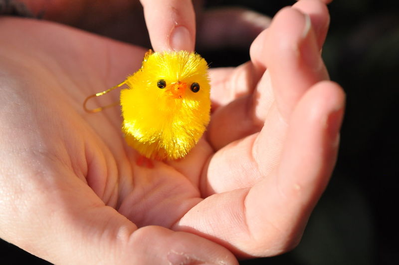 Cropped Image Of Hand Holding Toy Baby Chicken