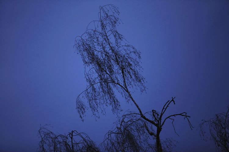 magical blue... where dreams come true...Tree Sky Blue Silhouette Low Angle View No People Nature Branch Beauty In Nature Outdoors Blue Sky Evening Sky Nightsky Night Silhouette Tree EyeEmNewHere BYOPaper! The Great Outdoors - 2017 EyeEm Awards
