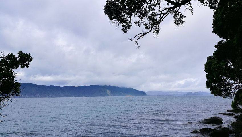 Slipper Island Slipper Island Pohutukawa Calm Sea Distant Boat Tree Water Nature Sea Landscape Mountain Outdoors Beauty In Nature Tranquility Cloud - Sky Vacations Scenics