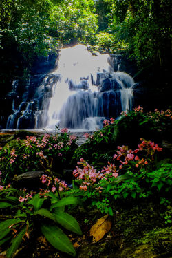 Mun dang waterfall 5th floor11 Waterfall Water Motion Long Exposure Nature Flower Beauty In Nature Scenics Outdoors Plant Tree Travel Growth Beauty Rapid No People Freshness Forest Day Landscape The Week On EyeEm EyeEmNewHere Wild Flowers Snapdragon Beauty In Nature