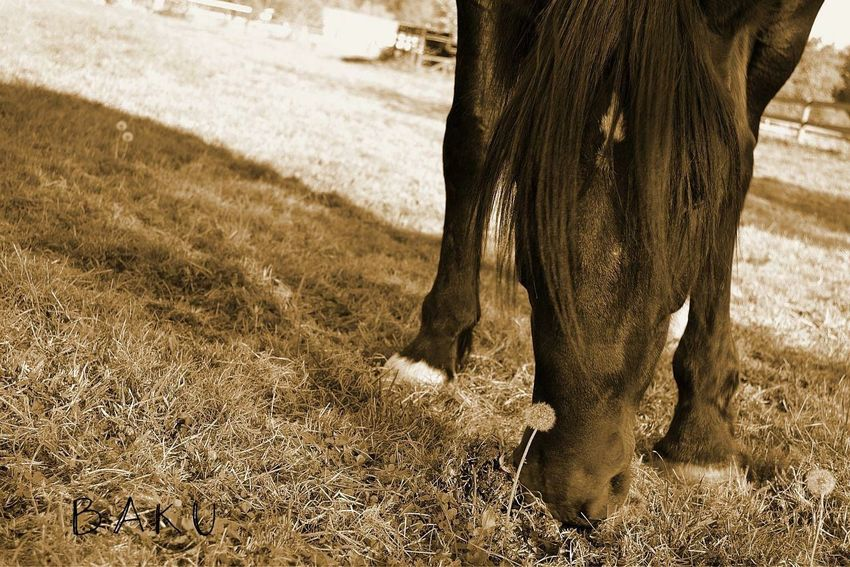 Horse Shirehorse Thoroughbred Blackandwhite Gelding Handsome Baku Bug's Eye View Connected With Nature