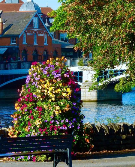 Thames river at Windsor Royal Wedding Royalty Windsor The Thames Flower Architecture Building Exterior Built Structure Outdoors Day Water No People Nature Beauty In Nature Tree Growth Plant Freshness
