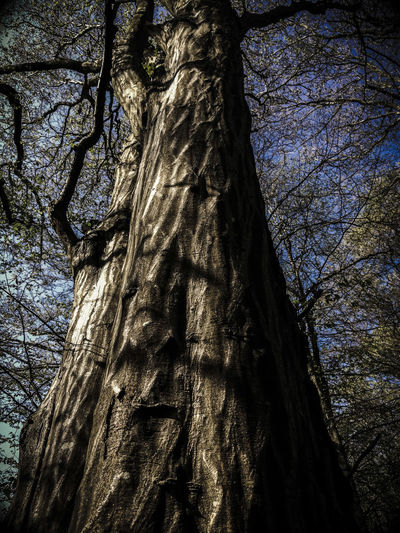 Tree Low Angle View Full Frame No People Growth Backgrounds Nature Textured  Close-up Sky Day Branch Outdoors Beauty In Nature Woodland Walk