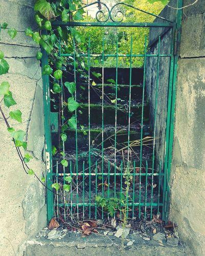 Secrets garden