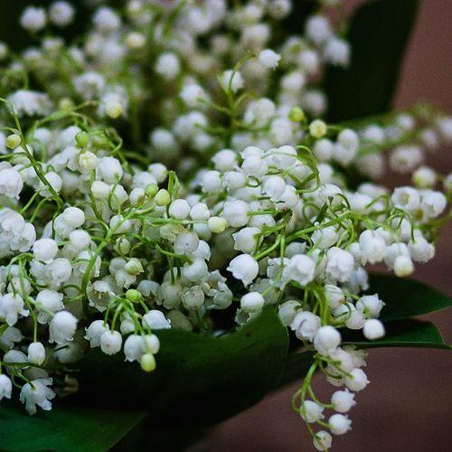 Вот такая вот весна ... настроение ландыши цветавесны цветочки фотонастроение природароссии красиво Spring Colorsnature Mood Flowers Lilies of the valley Photomood Nature Beautiful