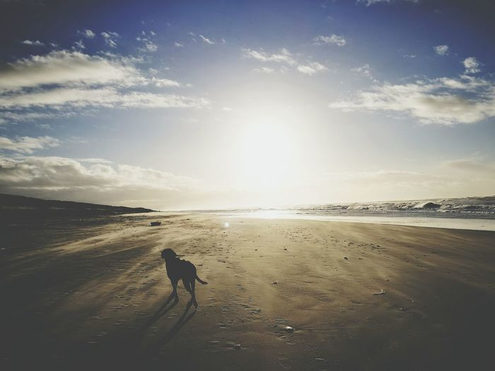Sand Beach Sea Sunset Landscape Outdoors Beauty In Nature Sky Day Nature Dog Waves