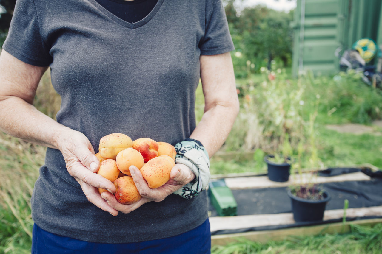 Midsection Of Man Holding Apricots In Yard