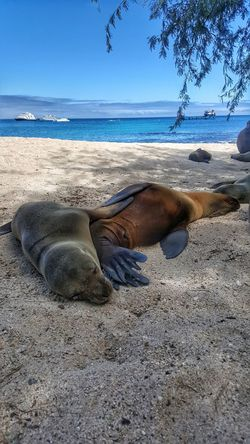 Beach Sand Sea Water Nature Outdoors Day Water's Edge Summer Sky Wave Horizon Over Water Vacations No People Sand Dune Landscape Beauty In Nature Swimming Sea Life Sea Lion Natural Habitat Animal Themes Nature Blue Travel Destinations Tranquility