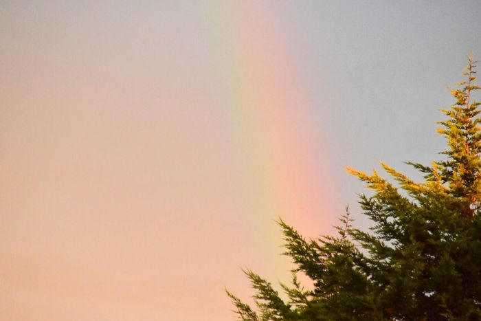It's a long time since I've seen a Rainbow Colors Colour Red Violet Indigo Orange Yellow Green Sky