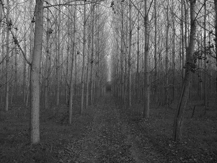Backgrounds Abstract Pattern Textured  Nature Hungary Tree No People Outdoors Day Beauty In Nature Black & White Dark Forrest Beautifuly Organized