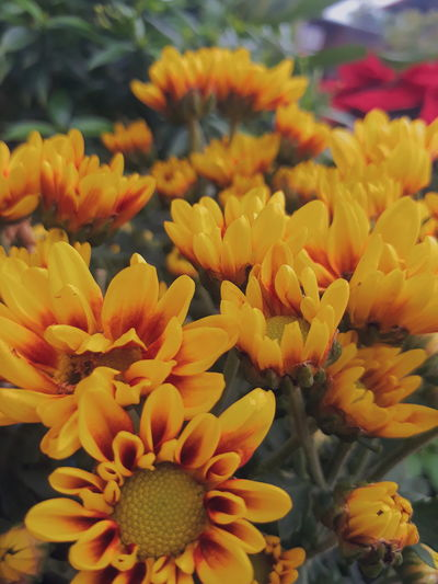 Photo By Samsung J7 Prime Flower Yellowflower Sunflower Beauty In Nature Petal Plant Flower Head Freshness Yellow Growth Day