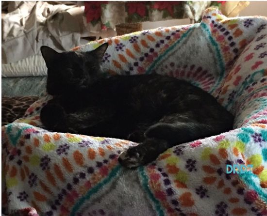 Resting the PAWS; cat feline,dreaming Beauty In Nature Friendship Pets