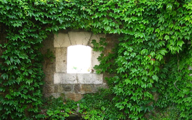 Frisches Grün Beauty In Nature Historical Building Historical Building Window Window View Ruins Architecture Tree Leaf Ivy Architecture Close-up Building Exterior Grass Built Structure Plant Green Color