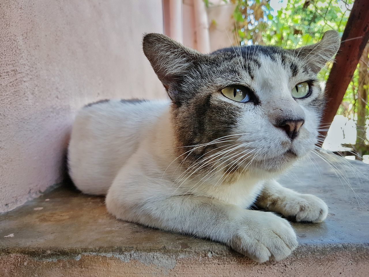 animal themes, one animal, domestic cat, mammal, pets, domestic animals, feline, portrait, whisker, looking at camera, day, sitting, no people, close-up, relaxation, outdoors