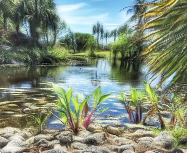 A little piece of paradise Enjoying Life Nature Photography Naturelovers Botanical Gardens Photography #photo #photos #pic #pics #tagsforlikes #picture #pictures #snapshot #art #beautiful #instagood #picoftheday #photooftheday #color #all_shots #exposure #composition #focus #capture #moment Icolorama