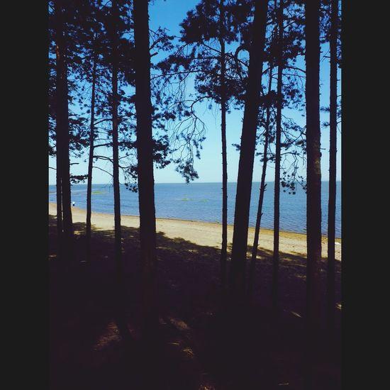 берег Beautiful Nature отдых на финском заливе Water And Free