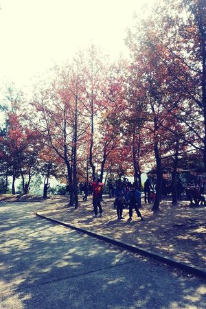 Relax Mode* Autumn Leaves