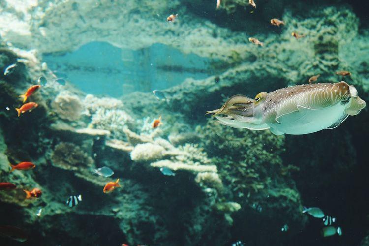 Fish swimming underwater in aquarium