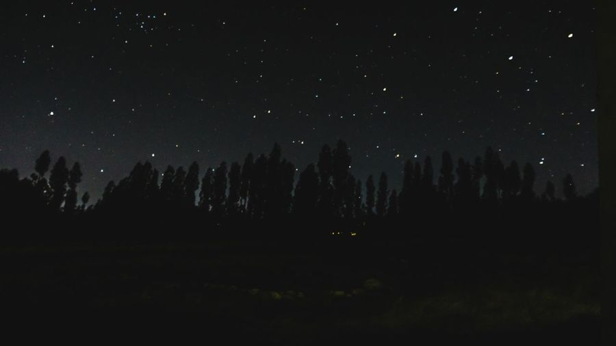 Silhouette trees against sky at night