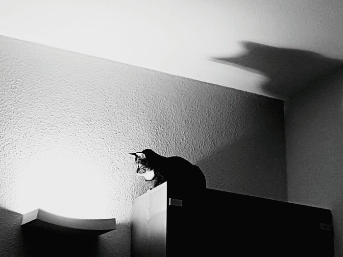 Silhouette of cat at home