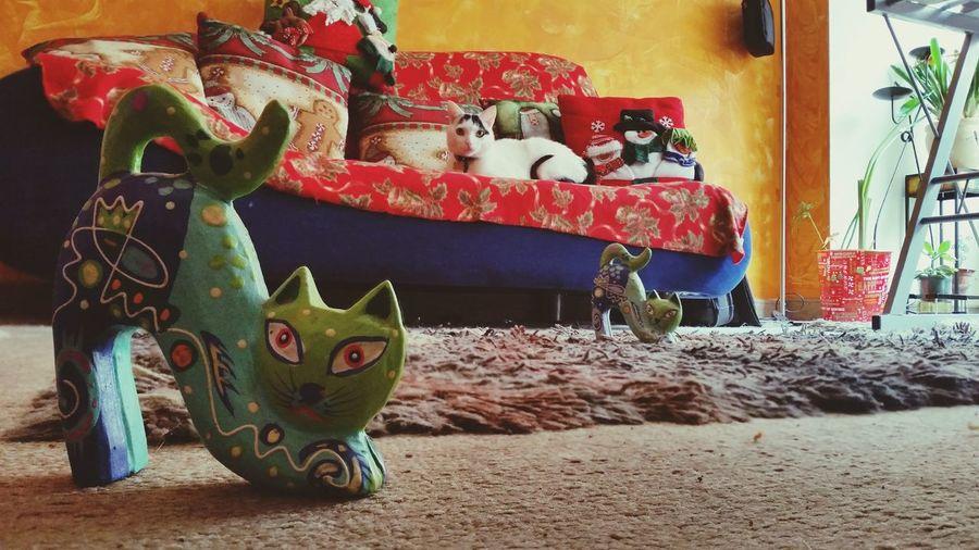 03. Three cats Cats 🐱 Cats