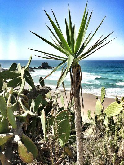 Zambujeira Do Mar Costa Alentejana Costa Vicentina Life Is A Beach Beach Cactus Agave Plants Portugal_lovers Portugaligers