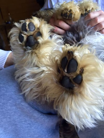 Hands and paws! Fine Art Photography Dog's Paw Hands Black Paws Doglover Schnauzers