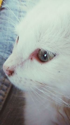 Catlovers Maggie My Kitty <3