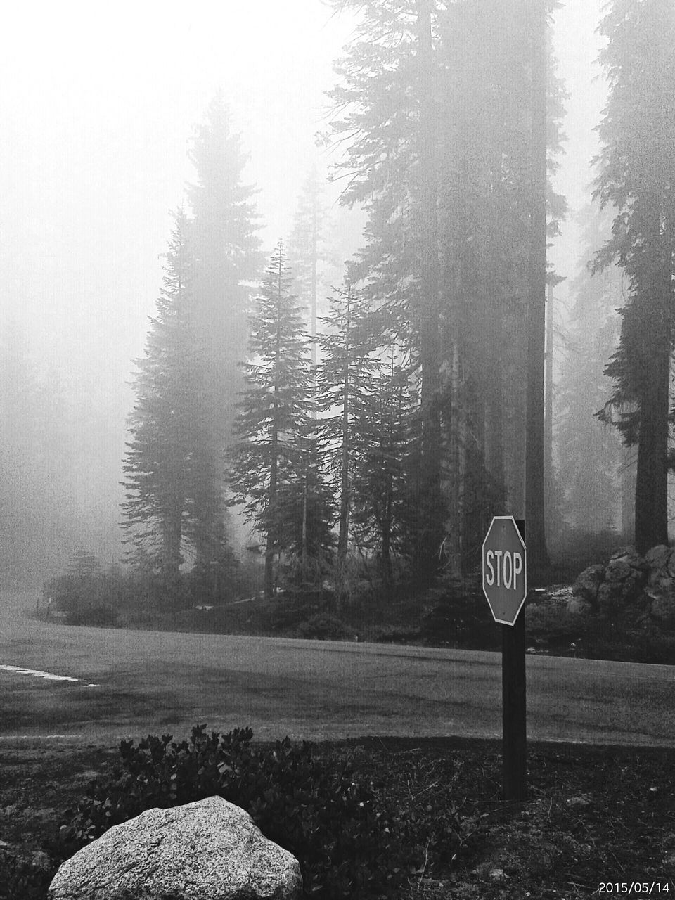 tree, communication, road sign, nature, forest, tranquility, no people, tranquil scene, beauty in nature, landscape, day, speed limit sign, growth, scenics, outdoors, sky