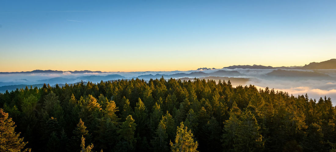 Arrival Beauty In Nature Blue Day Evergreen Tree Forest Idyllic Lake Landscape Lush - Description Mountain Nature No People Outdoors Pinaceae Pine Tree Pine Woodland Scenics Sky Social Issues Sunset Tree