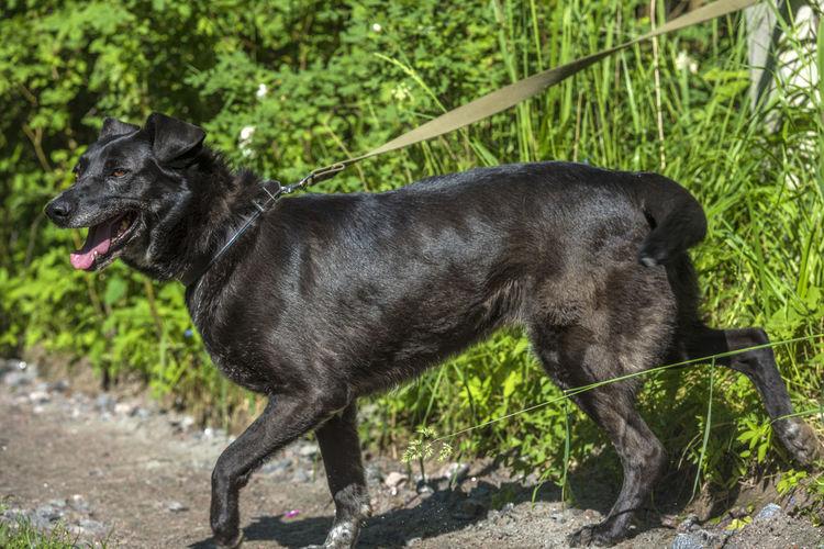 Black dog standing on land