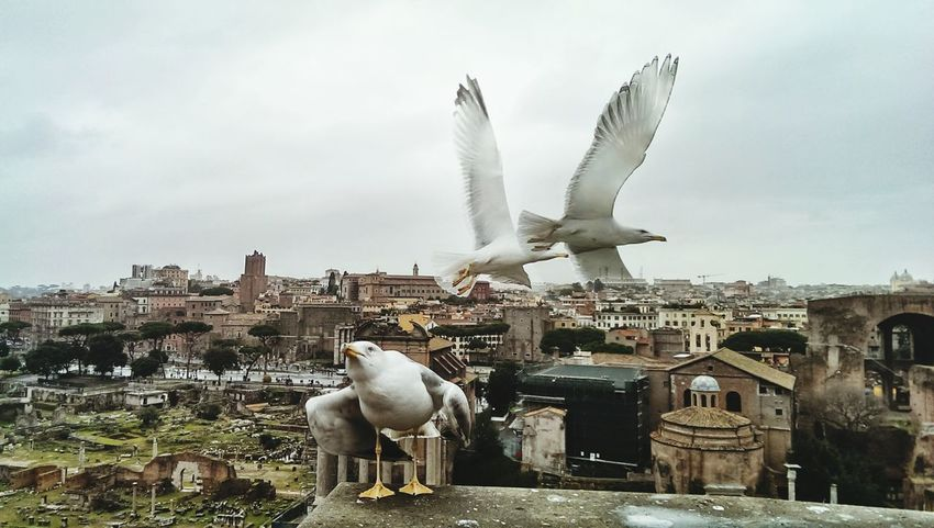 Everyday Joy Naturelovers Seagulls Bird Photography Beatiful View History Through The Lens  Historical Sights Animal Love Pricelessmoments  Roman Forum