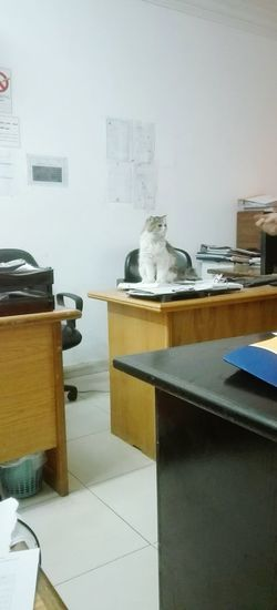 Work Egypt Employee New Boss Office Manger Office Mate