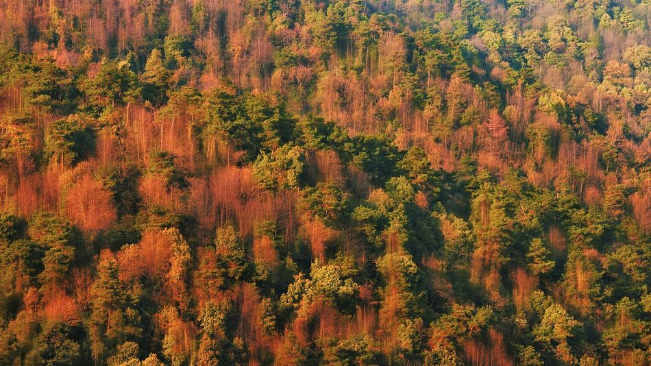 Yuelu Mountain Changsha,China Changsha 岳麓山 岳麓山的树木 Beautiful Photography I LOVE PHOTOGRAPHY