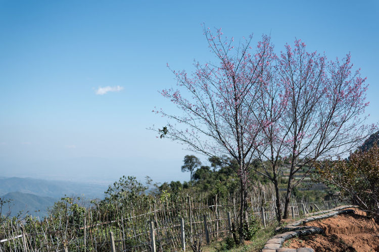 beautiful landscape of inthanon Green Landscape_Collection Nature Bare Tree Beauty In Nature Blue Branch Cold Day Environment Growth Land Landscape Mountain Nature No People Non-urban Scene Outdoors Plant Scenics - Nature Sky Tranquil Scene Tranquility Transportation Tree