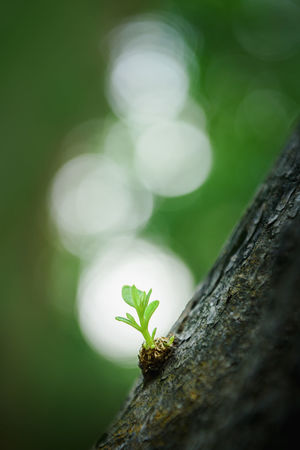 Green sprout on tree Green Green Color Growing Life New Life Plant Beauty In Nature Burgeoning Close-up Detail Environment Focus On Foreground Fragility Fresh Germination Growing Plants Macro Nature No People Outdoors Spring Sprout Symbolism Tree Tree Trunk