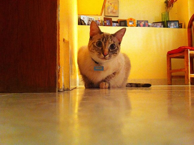 Taking Photos Check This Out Cat Cute Pets Cute Pets Animals My Cat
