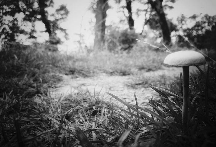 Monochrome Photography Monsoonmagic Morining Refreshment