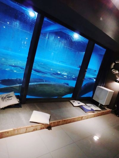Beluga White Whale Whale Whale Cafe Ocean Cute