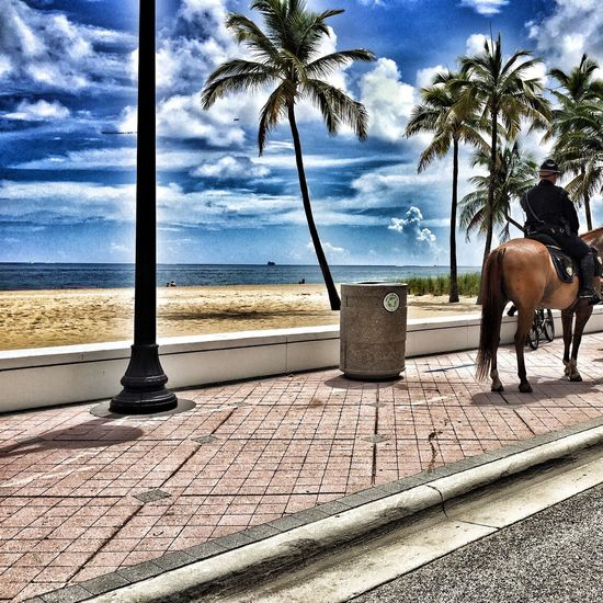 Palm Tree Sea Horses Beach Policeman Water Tree Travel Destinations Zoology Cloud - Sky Police Horse Taking Photos Check This Out EyeEm Best Shots Exceptional Photographs SeptemberPhotoChallenge Showcase September Outdoors