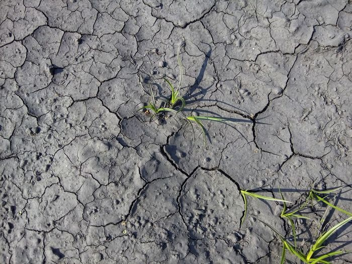 Hope Drought