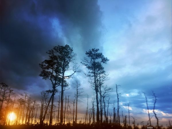 Sky Beauty In Nature Sunset Stormy Sky Trees And Sky Against The Sky Blackwater National Wildlife Refuge